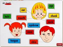 Face Parts Educational...