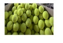 Pro Tennis Balls
