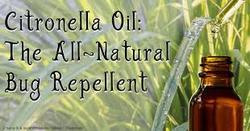 Citronella Essential Oil for Flavor And Fragrances