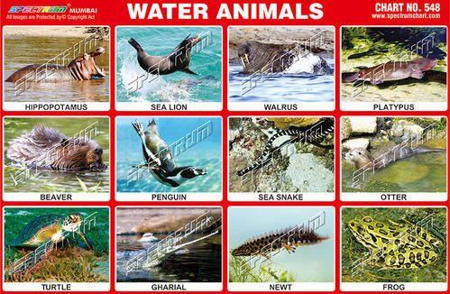 images of water animals with their names