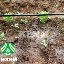 vegitable crop dripp irrigation