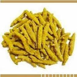 Dry Turmeric Roots