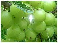 Organic Amla Fresh