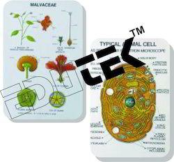 Botany Series IV