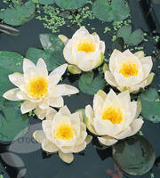 Water & Aquatic Plants