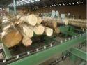 Log Feeding Chain Conveyor