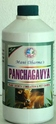 Panchagavya