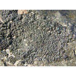 Promethium Isotopes, Metal