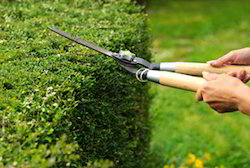 Landscape Maintenance Services Garden Maintenance Services