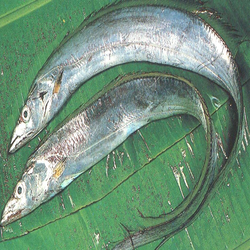 how to clean ribbon fish