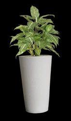 decorative flower pot in chandigarh suppliers dealers retailers of decorative flower pot. Black Bedroom Furniture Sets. Home Design Ideas