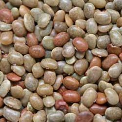 Horse Gram Seed