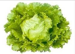 Ice Burg Lettuce Seeds -  Bruma