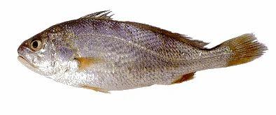 Aquaculture Product - ...