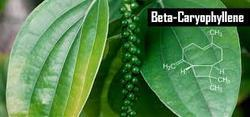 Beta Caryophyllene 98%