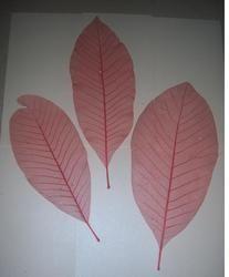 Custom Colored Long Size Skeleton Leaves