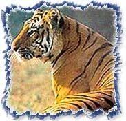 Delhi - Jaipur - Agra - Wildlife
