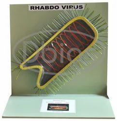 Virus Rhabdo