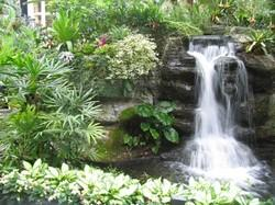 Aquascaping Services