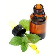 Peppermint Oil Pure And Natural Certified