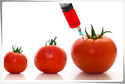 Genetically Modified Organisms (GMO) Testing