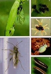 bugs management services