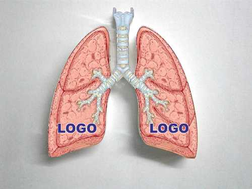 Trade Promotion Items Lungs Shape Acrylic Paper Weight