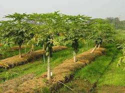 Consultancy on Organic Farming
