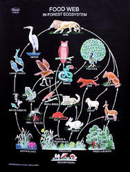 Biology Charts