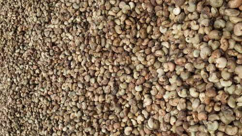 Raw Cashew Nuts Benin Origin