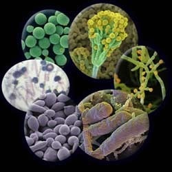 Yeast and Mould Micro Biological Testing Service