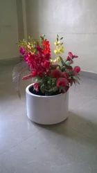 FRP Planters for Gardens