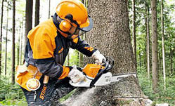 Petrol Chain Saw for Forestry