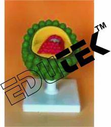 Aids Virus Model
