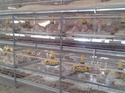 Battery Cages for Broiler