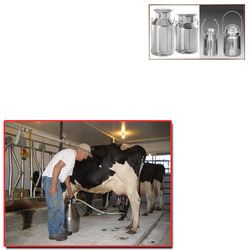 SS Milk Cans for Dairy
