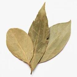Teja Patra / Bay Leaf