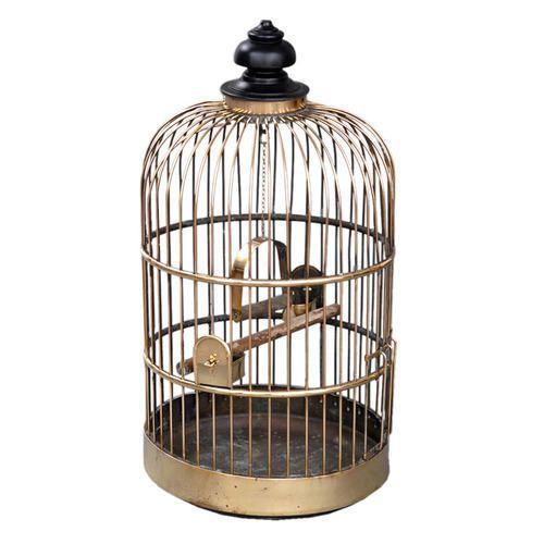 Bird Cages in Ahmedabad, Gujarat | Pakshi Ka Pinjra Suppliers ...