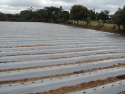 Agriculture Mulch Film