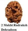 2 Mukhi Rudraksh