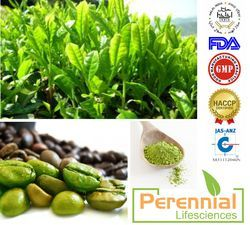 Green Coffee 60 %/ Chlorogenic acid/ Coffee Arabica