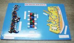 RNA Model