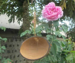 Half Cut Oval Coconut Bird Feeder