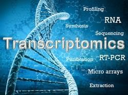 Transcriptomics Teaching Kit