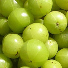 Amla / Emblica Officinalis/ Indian Gooseberry