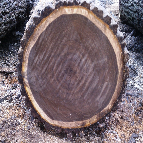 Walnut Veneer Sheets Walnut Veneer Logs