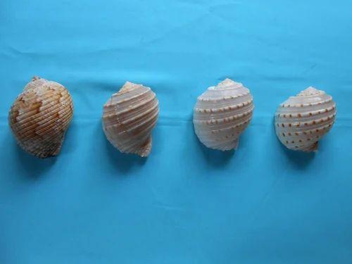 Sea Shell Craft