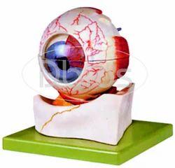 Eye Ball Model