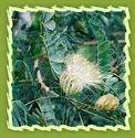 Anti Aging Herbs