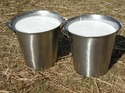 Stainless Milk Bucket